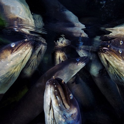 National Geographic_foto_29