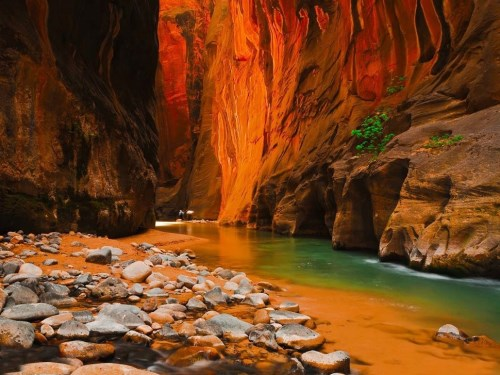The Bottom of Zion Canyon, Utah