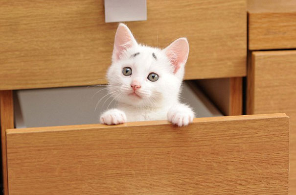 Confused Kitten_Gary