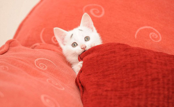 Confused Kitten_Gary_2