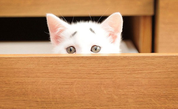 Confused Kitten_Gary_3