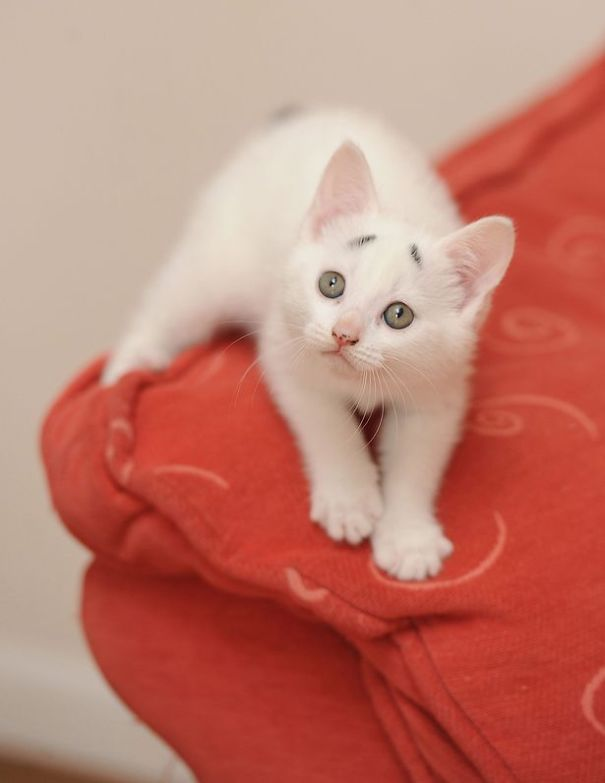 Confused Kitten_Gary_4