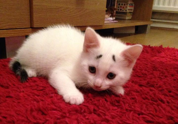 Confused Kitten_Gary_6