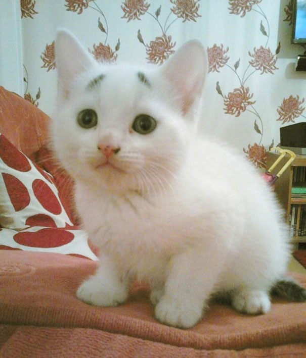 Confused Kitten_Gary_7