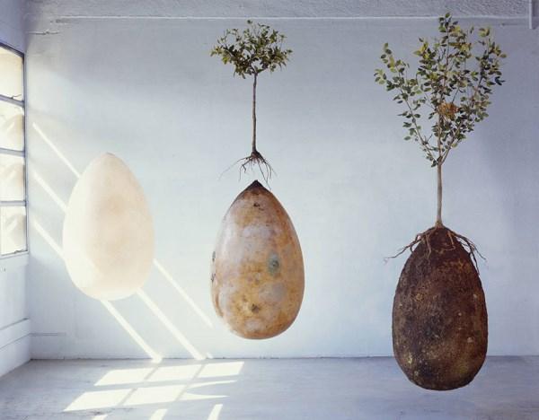 organické pohřební lusky